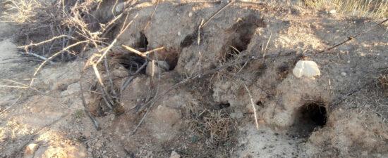 Madrigueras de conejos de monte